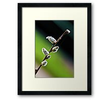 Salix Framed Print