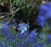 A gurgling stream runs through it - Bluebell wood by Penny V-P