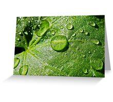 Droplet Macro Greeting Card