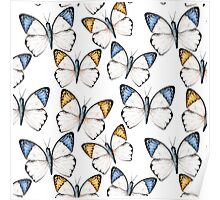Tropical butterflies Poster