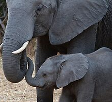 Love & Trust - Mother & Baby African Elephants  by Jensphotos