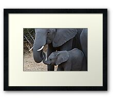Love & Trust - Mother & Baby African Elephants  Framed Print