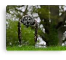 Great Grey Owl (Strix nebulosa) in flight Canvas Print