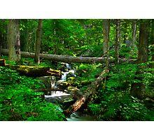 Smoky Mountains Spring Photographic Print