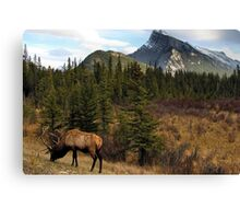 Mt. Rundell - Banff National Park Canvas Print