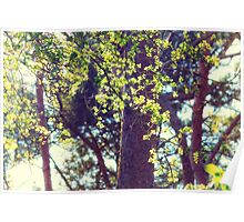 Spring in the Sun Poster
