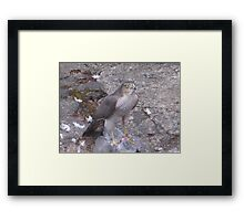 Hawk In For The Kill Framed Print