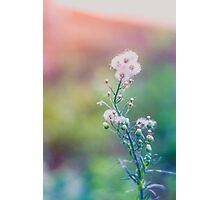 Everything is just.. dandy...dandelion  Photographic Print