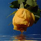 Yellow wet rose by Ann Persse