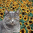 Tabby Cat and Sunflowers by Lisann