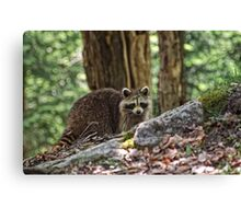 Come back for a second look!! Canvas Print