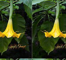 Angel's Trumpet by ginawaltersdorf