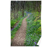 Along the Bluebell Path Poster