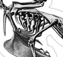 bird skeleton Sticker
