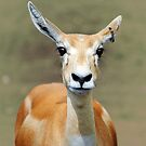 Blackbuck  by Lissywitch