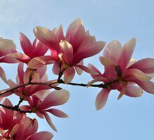 Spring Beauty by Nancy Barrett