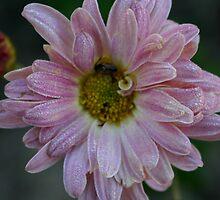 Blooper Bloom by mollywog