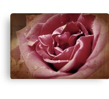 Faded blooms and memories Canvas Print