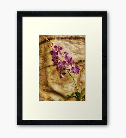 Orchid - Just Splendid Framed Print