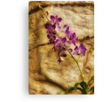 Orchid - Just Splendid Canvas Print