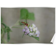 Hoverfly on nettles Poster