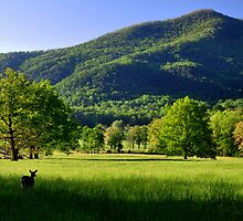 Great Smoky Mountains National Park by Jane Best