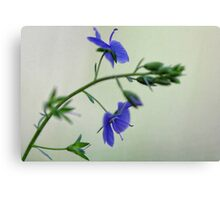 -Georgia Blue Speedwell Canvas Print
