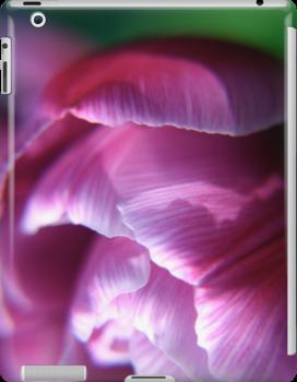 Pink Tulip flower petals by Vicki Field