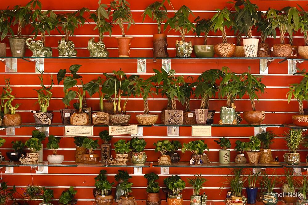Plants for Sale by Sheil Naik