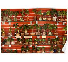 Plants for Sale Poster
