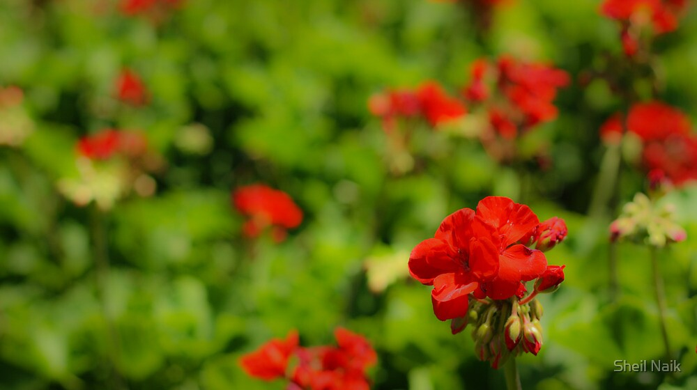 Flowers at Epcot by Sheil Naik