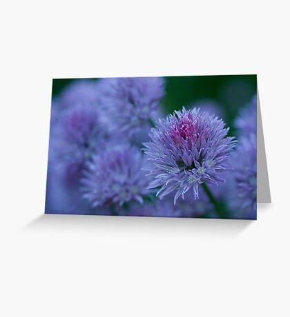 Blush Brush Greeting Card