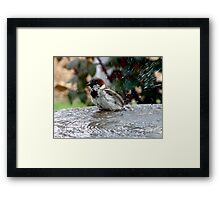 Squeaky Clean Framed Print