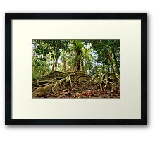Tropical tree roots in the jungle of Costa Rica Framed Print