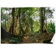 Tropical trees and roots in the jungle Poster