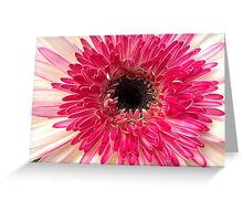 Lollipop Flower Macro Greeting Card