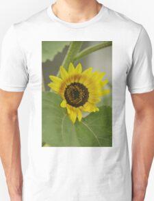 Sunflower - macro Unisex T-Shirt
