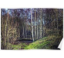 Woodland Spaces Poster