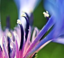 Cornflower Floral Macro Art Sticker