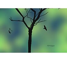 I Know Why the Caged Bird Sings Photographic Print