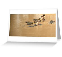 Time for a swim!  Greeting Card