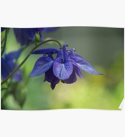 Purple Flower III Poster