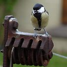 Great Tit on rusty old line prop by Lissywitch