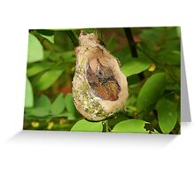 Two babies Rufous-tailed hummingbird in nest Greeting Card