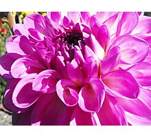 Dahlia with Orton Effect Photographic Print