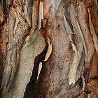 Gum tree bark by navinda