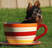 Pup in a cup by Michelle *