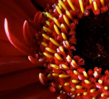 Red Gerbera flower macro Sticker
