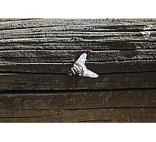 House Fly Photographic Print