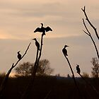 Cormorants roost by SWEEPER